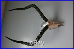 Real Impala Skull Silver Spray Painted African Antelope Horns/Antelope Skull