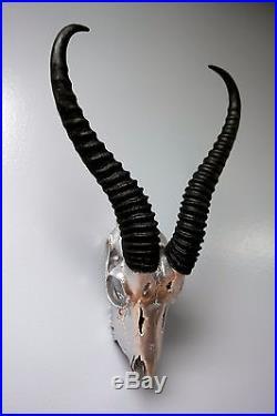 Real Springbok Skull Silver Spray Painted African Antelope Horns/Antelope Skull